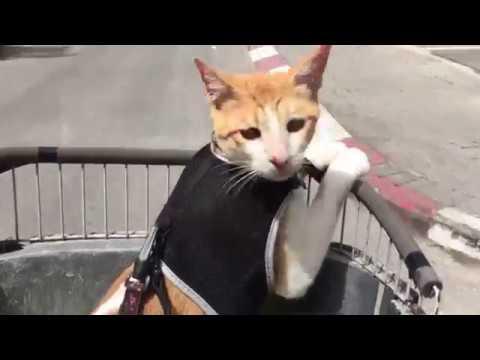 Cat enjoys a bike ride