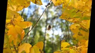 Скачать Осень наступила