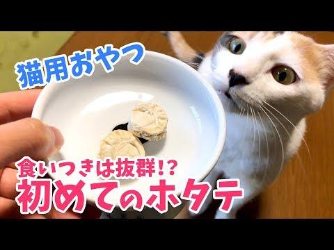 【猫用おやつ】ぽてとに初めてホタテをあげてみたら意外な反応だった!