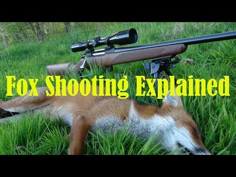 Daytime Fox Shooting Explained