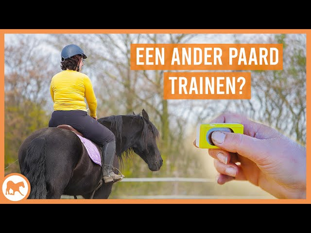 Een paard trainen wat niet van jou is?