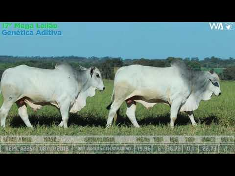 LOTE 43 - DUPLO - REMC A 2014, REMC A 2254 - 17º Mega Leilão Genética Aditiva 2020