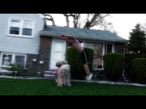Dog Frontflip