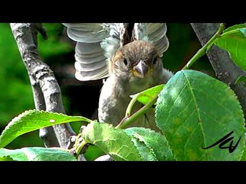 Birds and Western tiger swallowtail butterfly - EXCLUSIVE NATURE - YouTube