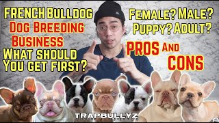 FRENCH BULLDOG PROs and CONs | Dog Breeding/Business | Should you get a Male? Female?  Puppy? Adult?