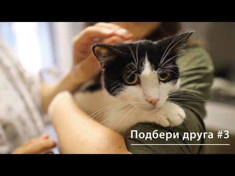 Вопрос: Как организовать благотворительный фонд помощи животным?