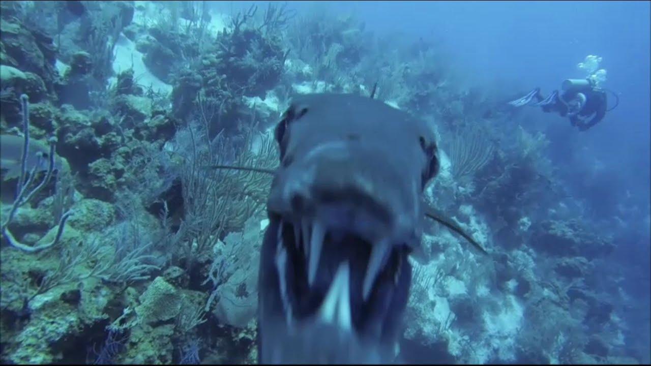 Barracuda Angriff