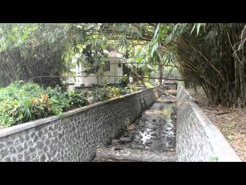 Suasana Damai Di Kebun Raya Bogor - Bogor Botanical Garden