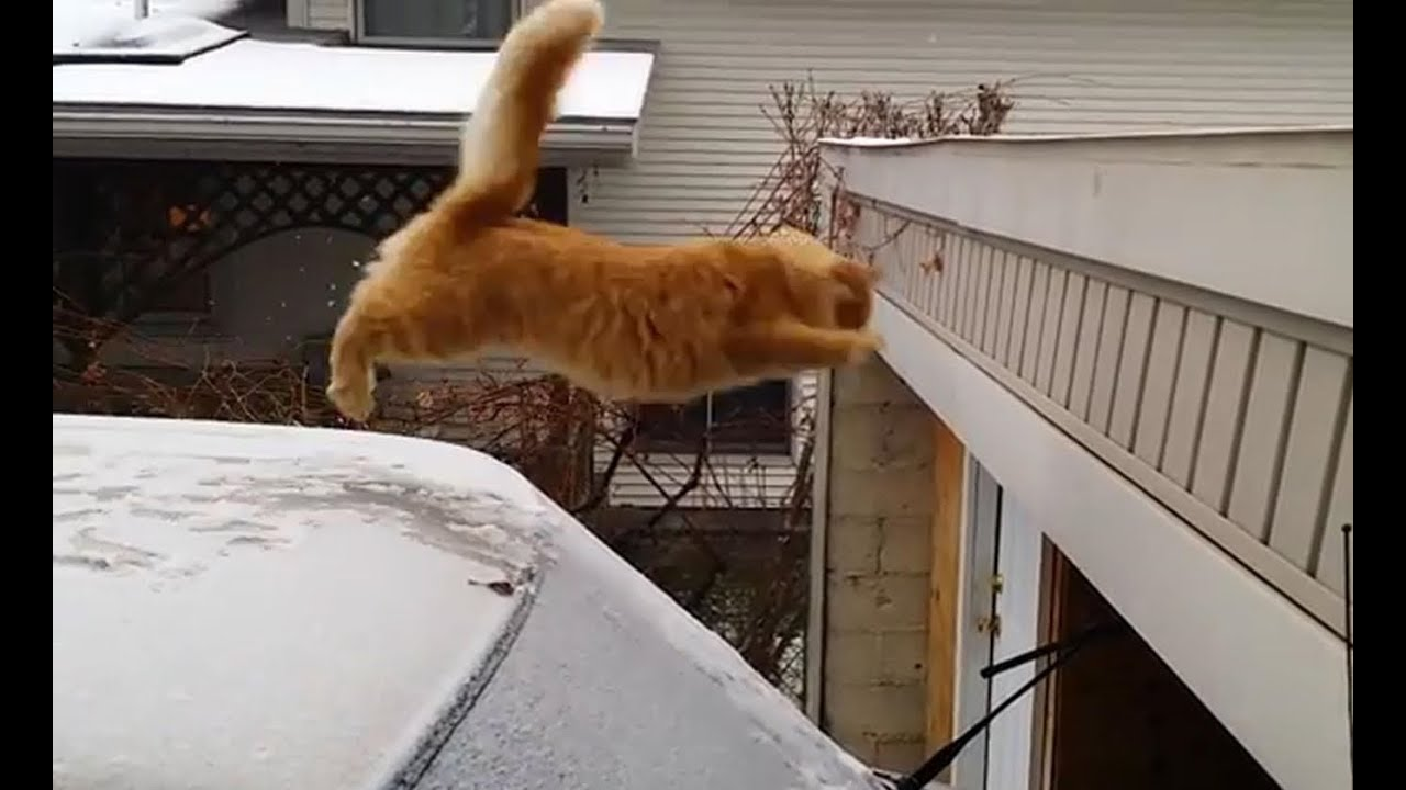 Funny Cat Jumping Off Building