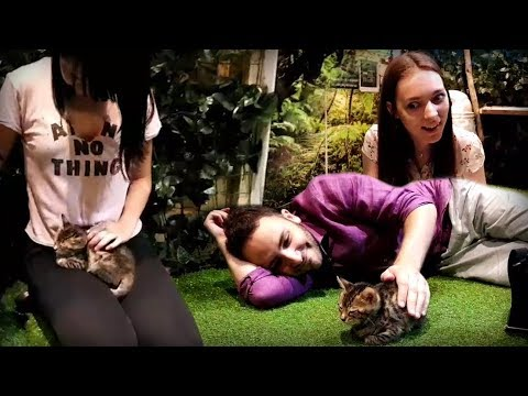 Cat Cafe with Polina and Rin