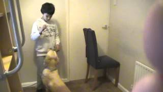How To Train Your Dog Well!!        (bobby Keen) ( Little Brother Of April Keen)