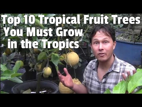 Top 10 Tropical Fruit Trees You Must Grow if You Live in the Tropics