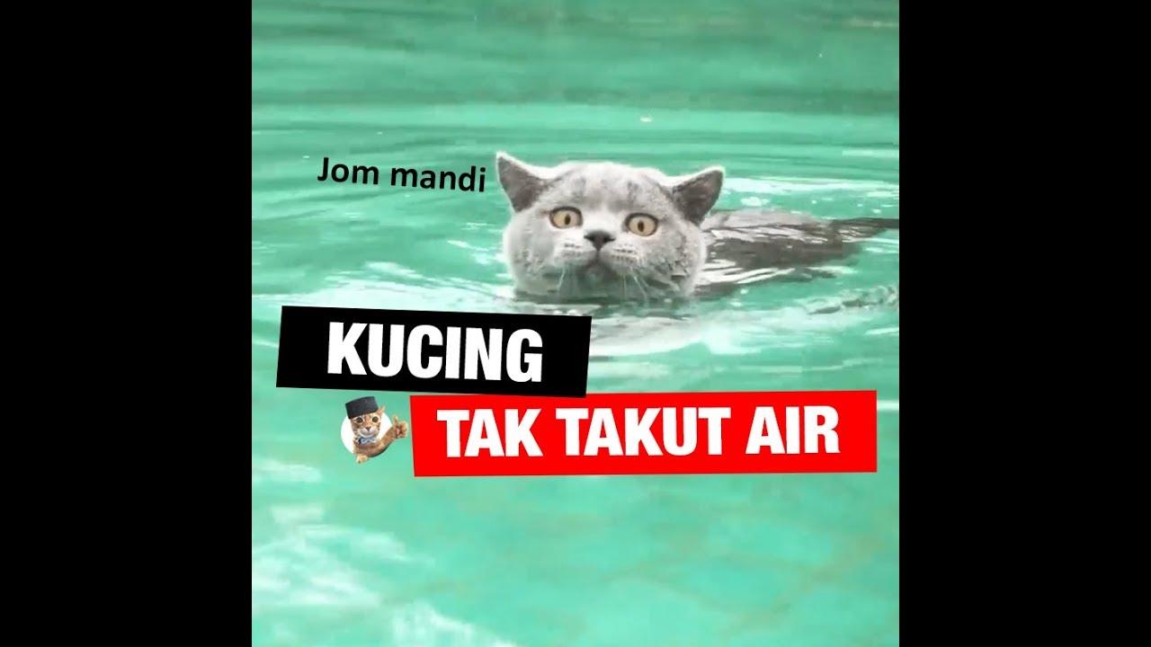 Kucing tak takut air