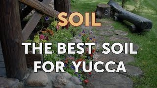 The Best Soil for Yucca