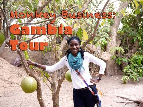 Monkey Business: Gambia Tour