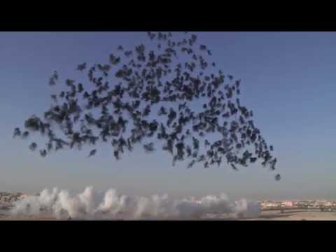 Cai Guo-Qiang Black Ceremony