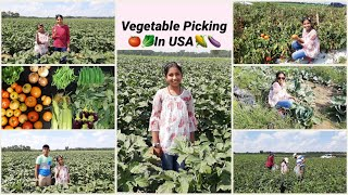 Vegetable picking in USA ॥ Vegetable farms in USA ॥U pick farm in New Jersey ॥ Farming fields in USA