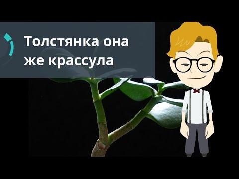 Николай I — Википедия