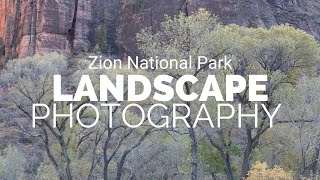 My Best Photography Day In Zion National Park | Fall of 2019 | Landscape Photography
