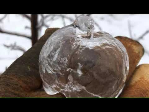 Justin The Web Guy - Freezing Rain And Frigid Temperatures Create A Natural Wonder-Ghost Apples!