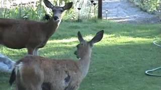 Deer says,