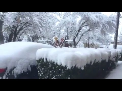 Mexico Coldest in History & 50K Cows Freeze to Death | Mini Ice Age 2015-2035 (131)