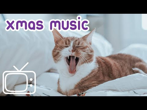 Cat Christmas Music! Fire Footage for your Cat to Curl up In Front of the Fire!