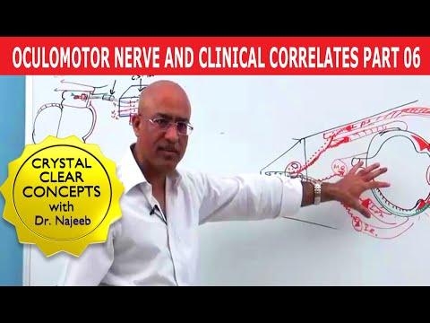 Oculomotor Nerve and Clinical Correlates Part 6