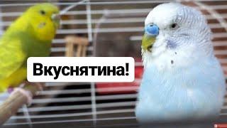 Самый лучший корм для попугаев vasha prelest