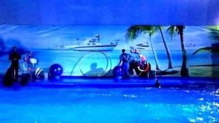 Захватывающее зрелище. Шоу с дельфинами и морскими котиками. Дельфинарий Кишинев, Молдова
