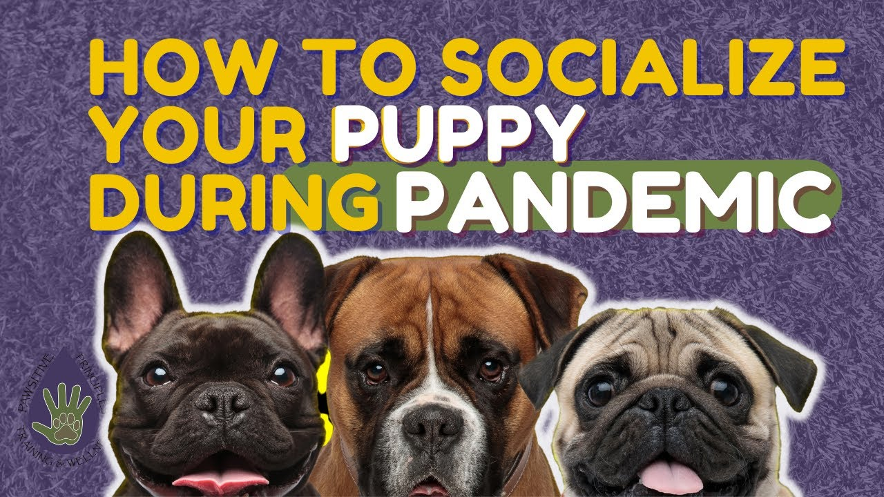 How To Socialize Your Puppy During a Pandemic