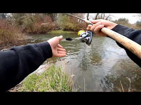Salmon Creek Steelhead