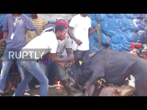 Haiti: Cows sacrificially slaughtered as thousands gather for annual Voodoo festival *GRAPHIC*