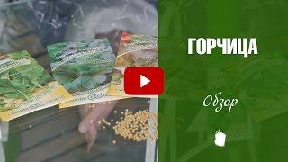 видео Польза баклажанов: советы и секреты их применения