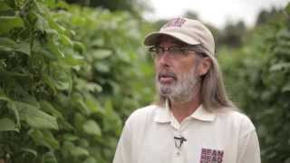 Bean Head Farm - Urban Farm to Fix the Food Desert