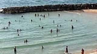Панорама пляжа. Краткосрочная аренда квартир в Израиле(, 2013-06-08T17:29:04.000Z)
