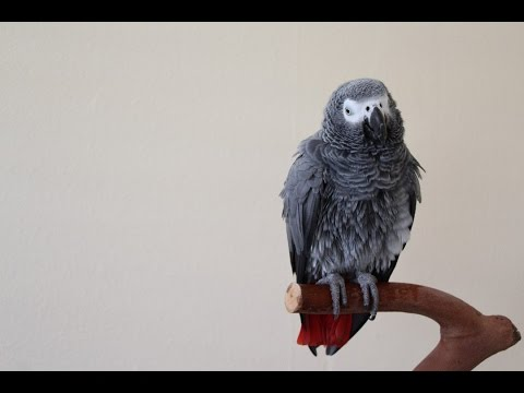 How to Train Your Parrot to Talk