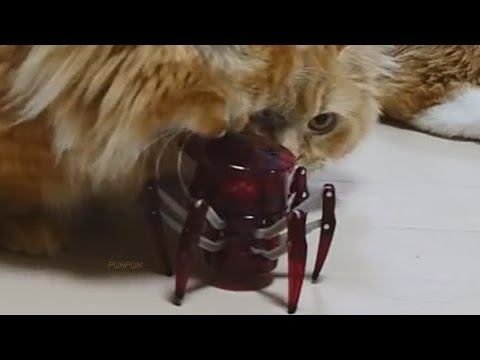 Cats play with cute little robot