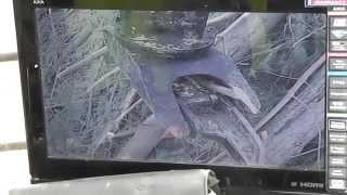 Falcon Foresty Claw - Logging Nelson NZ