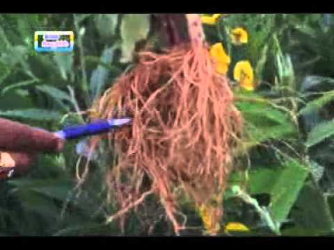 24 04 2015preservation and storage of food grains and crop seeds dr shivashankarappa and importance