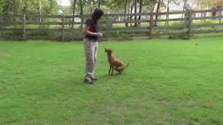 Puppy Training: Beginning and Ending Playtime