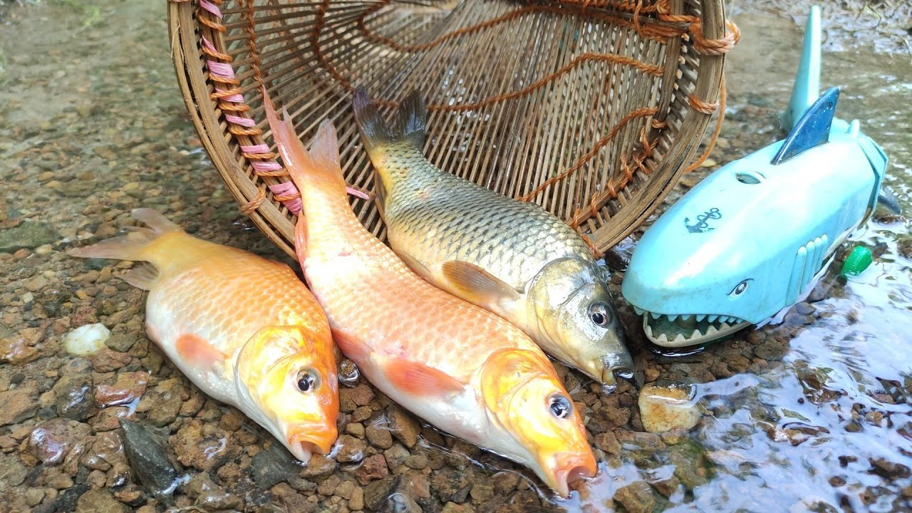 Carp Fish Trap, Ornamental fish, Shark, Lizard, Crab, Lobster, Gourami Fish [Part528]
