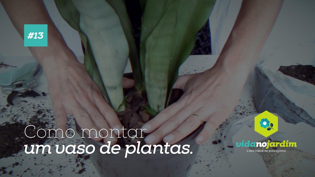 Como montar um vaso de plantas espada de s o jorge 13 for Como cuidar las plantas ornamentales