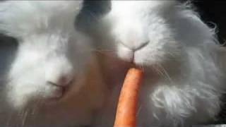 Two-Headed Bunny Feast