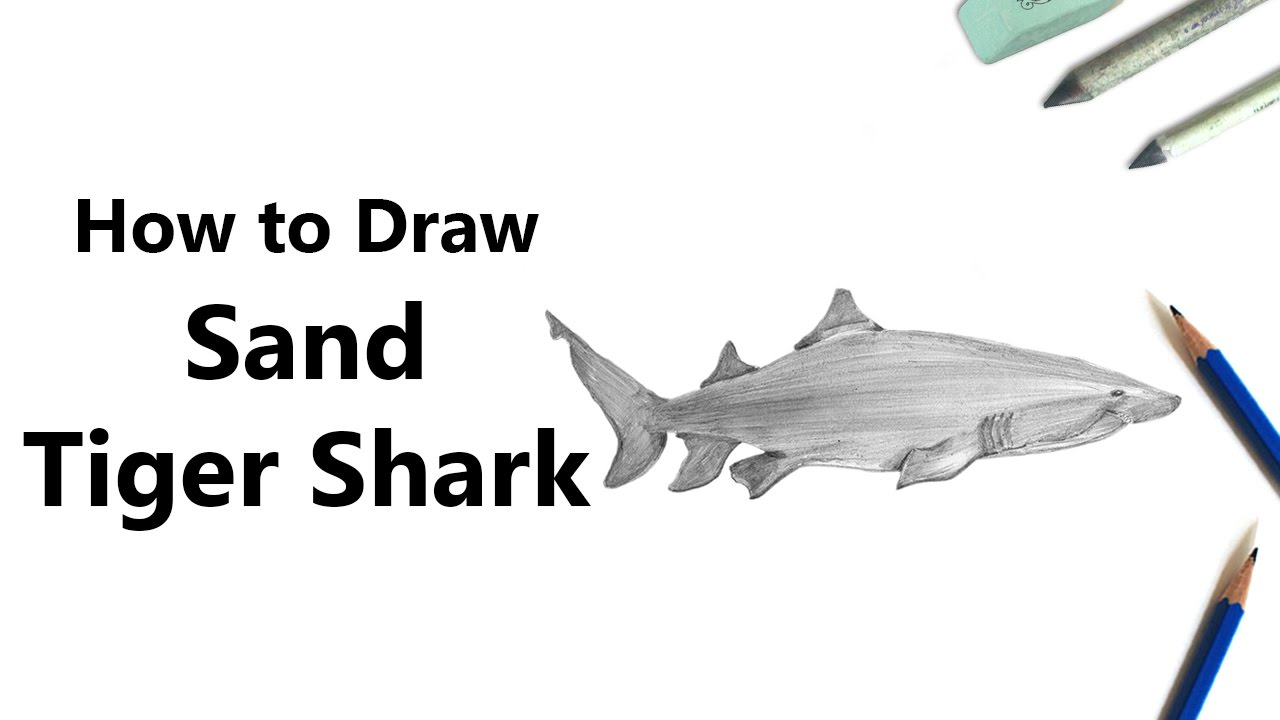 Uncategorized How To Draw A Tiger Shark how to draw a sand tiger shark with pencils time lapse youtube