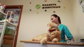 Клиника Планета Животных