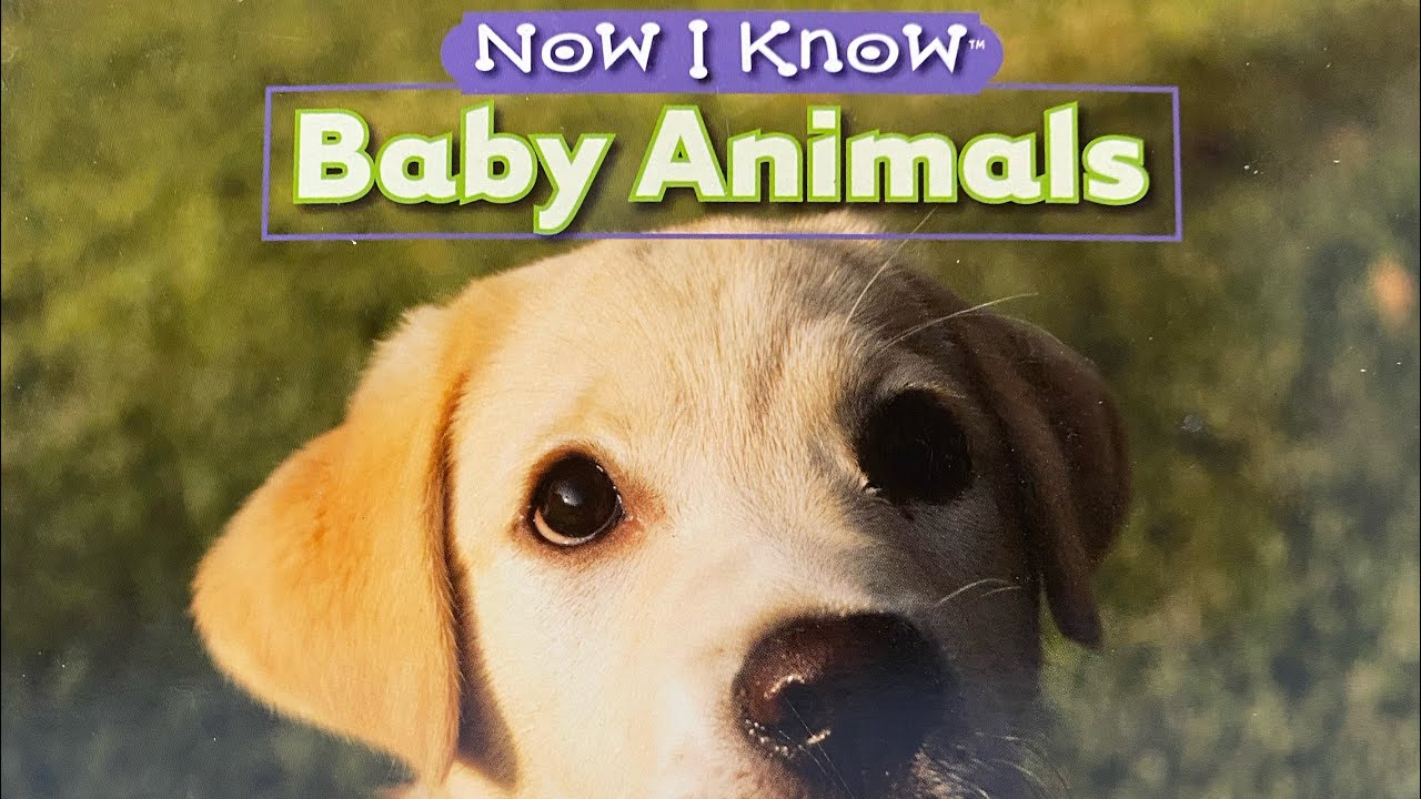 Now I know BABY ANIMALS Read Along Aloud Story Audio Book