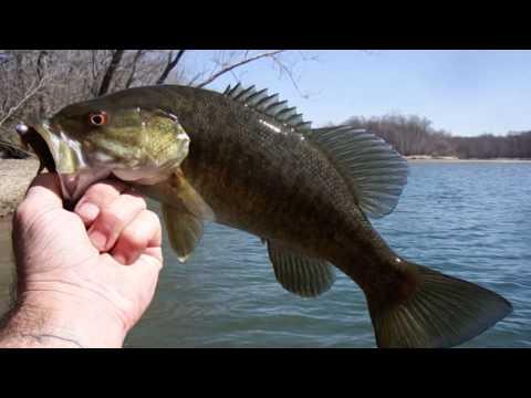 Fishing Missouri - Bass