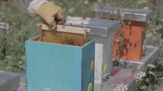 commercial bee hives for sale-commercial bee hives for sale