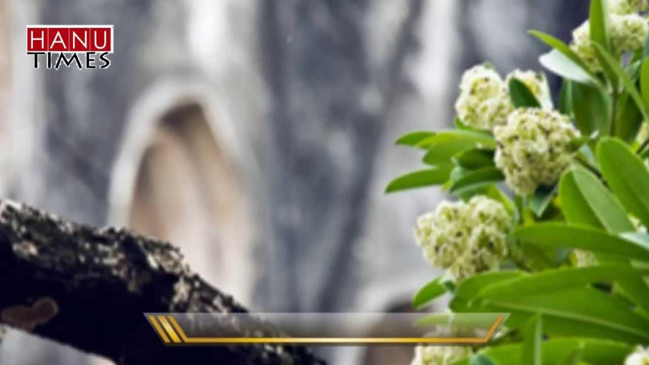 Quà tặng Âm nhạc - số 1: Xúc cảm mùa thu (Radio Online Hanutimes - ĐH Hà Nội)